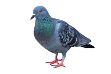 Control de aves en entornos urbanos