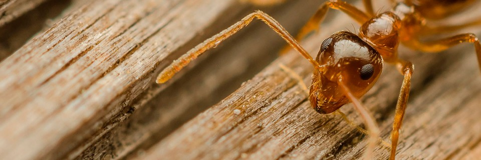 CONTROL DE PLAGAS EN JAEN Eliminar termitas y carcoma - Prevención de Legionella