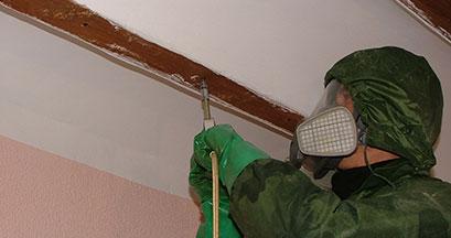 Eliminar termitas en Jaen