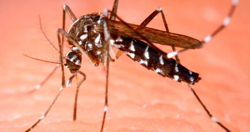 La autopista del mosquito tigre